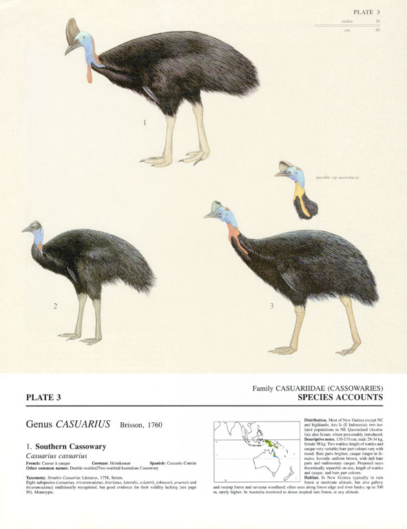 A page from a book about birds