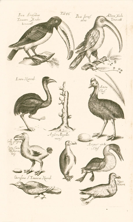 Page from a book, drawings of nine different birds