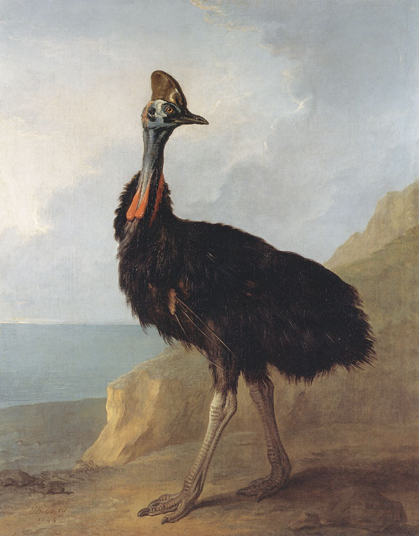 A cassowary on the shore, looking noble