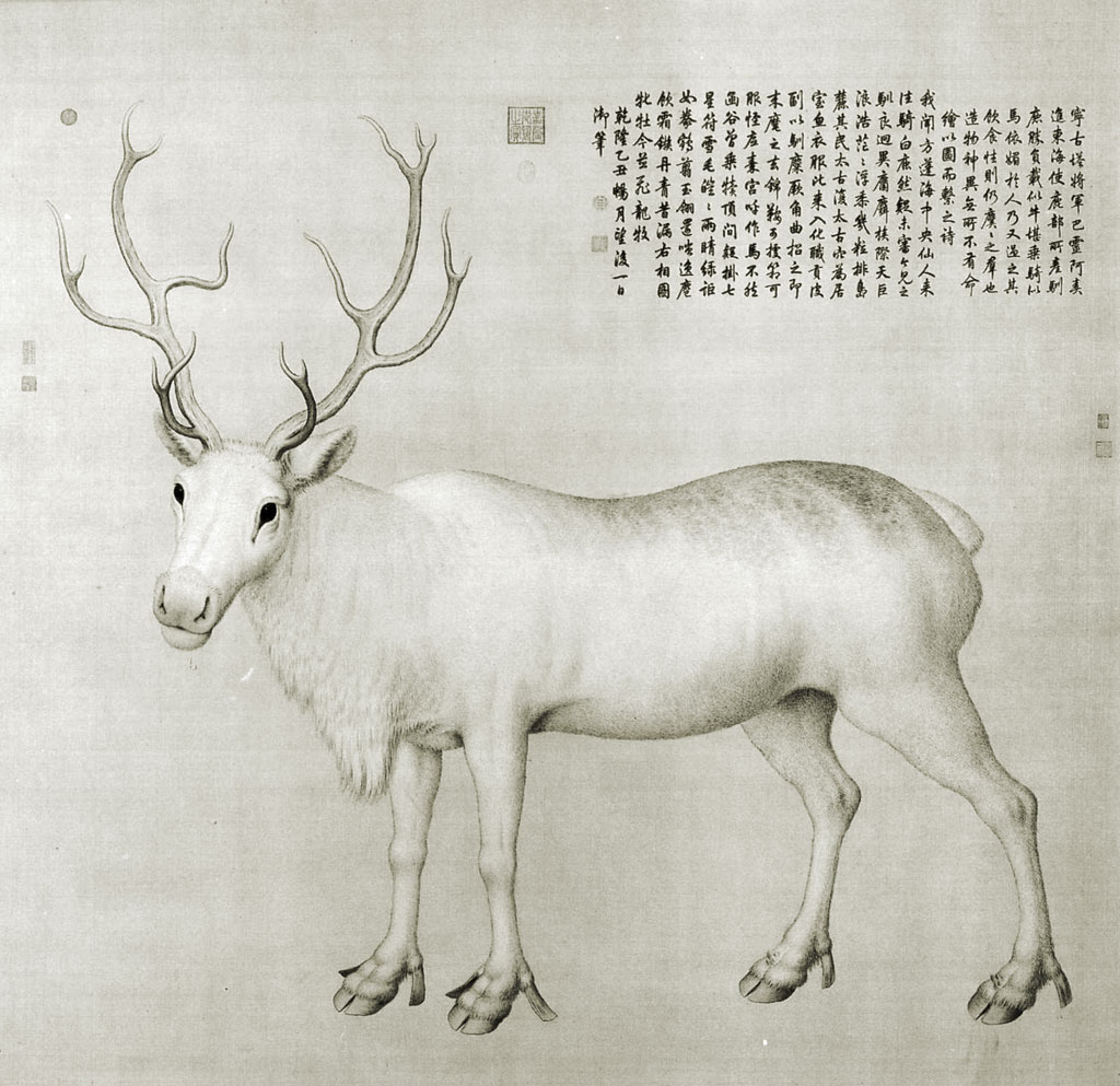 White reindeer shown from the side, looking toward the viewer; a block of Chinese text in the upper-right corner