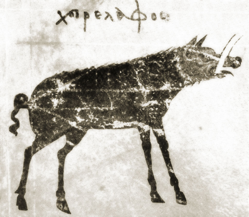 Hog Deer